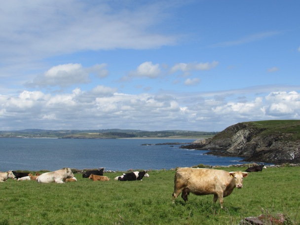 Cows surrounding lighthouse