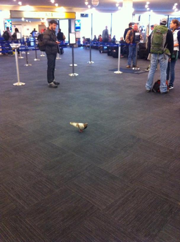 I'll bet he'll be having a great flight